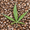 CANNA INFUSED COFFEE